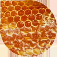 Документи за износ на пчелен мед